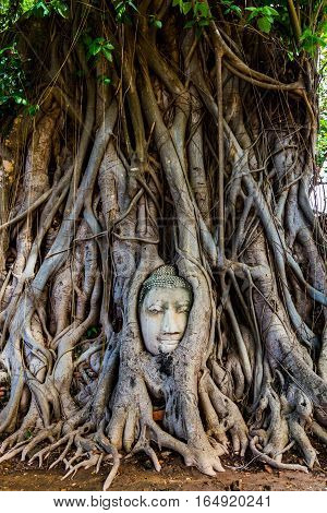 Buddha's head trapped in the roots of a tree in Ayutthaya