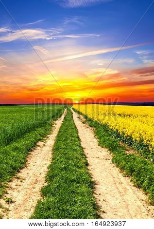 Field way on the rape field in sunset