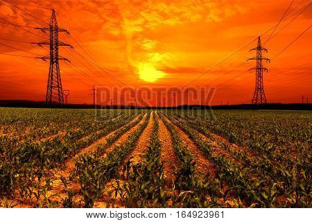 Corn field with electricity pylon at sunset