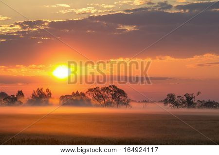 Beautiful summer morning landscape. Misty dawn. Beautiful morning sky.