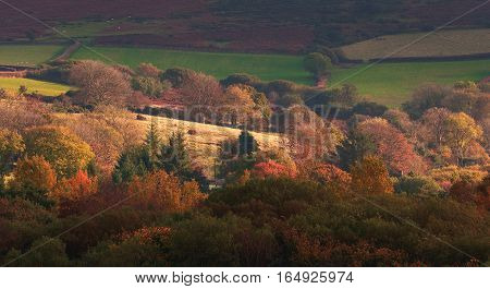 Dartmoor National Park. Hills. Farmland. Autumn evening. Trees with multicolored leaves. Devon. UK