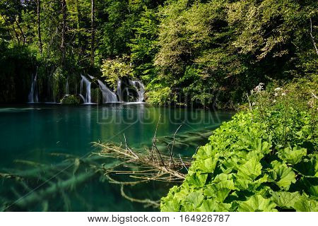 A small waterfall and sunken trees in the clear lake in Plitvice Lakes National Park.