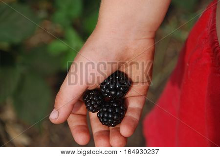 on photo ripe large berry Bush BlackBerry