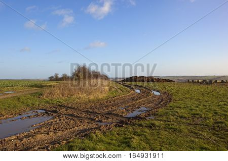 Manure Heap And Farm Track