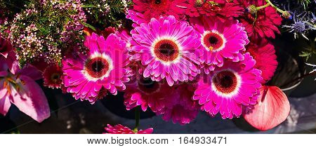 Flower wedding holiday decoration, beautiful purple pink gerbera flowers blooming bouquet