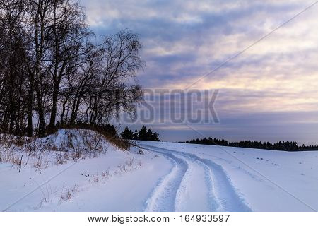 Snow and a group of trees at sunset. Moravian landscape Tasovice.