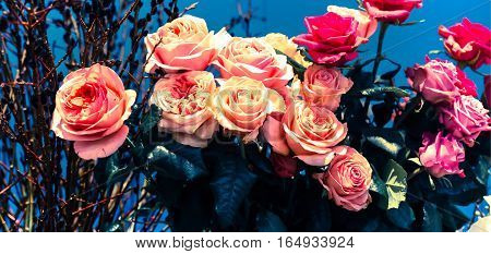 Flower wedding holiday decoration, beautiful pink roses blooming bouquet on blue background