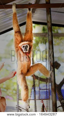 Photos bright background funny furry monkey in zoo