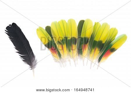 Black raven feather and colorful parrot feathers isolated on white background