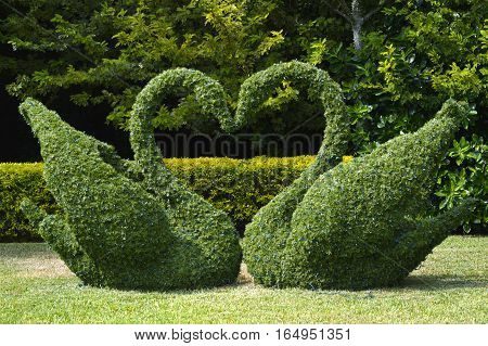 Topiary swans love heart with Christmas lights