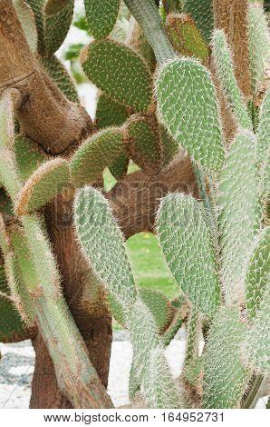 Cactus landscape. Mexico. Cactus field. Garden of flower. Green Cactus closeup.