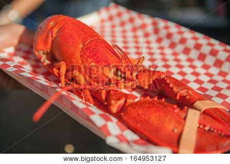 Close up of cooked delicious huge lobster. Lobster food festival