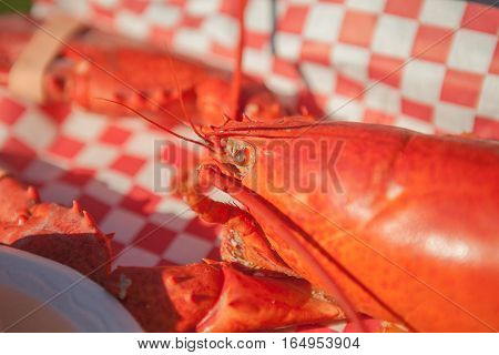 Close up of cooked lobster served with bun and butter. Lobster food festival