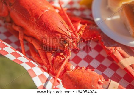 Close up of freshly steamed and boiled huge lobster. Lobster food festival