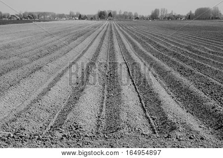 In straight lines ploughed field ready for new crops.