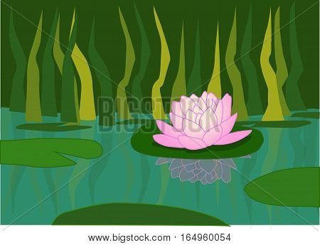 The pink water-lily in the river, overgrown with green reeds.