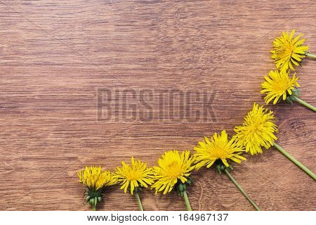 yellow dandelions lying on the wooden background yellow summer flowers frame of flowers