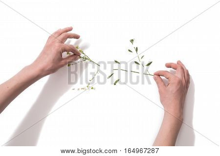 Flower patern on a white background. Cut flower isolated on white background. Hand made picture. Taking care of nature.
