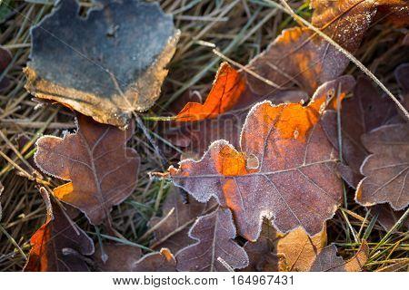 Fallen Leaf Macro.