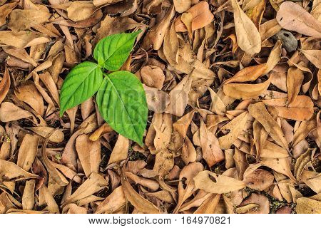 Fresh green foliage amid the foliage dry.