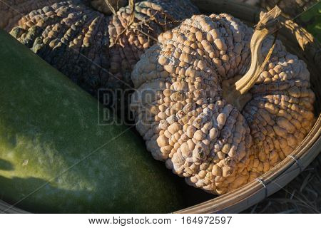 Ripe thai pumpkin on bamboo basket stock photo
