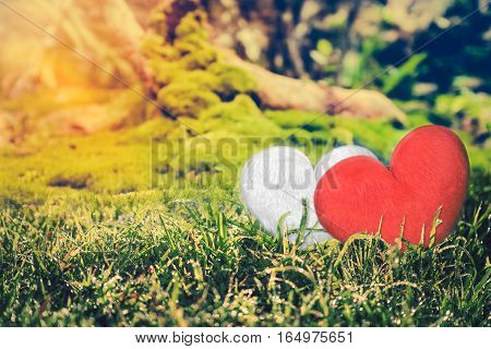 Love concept for Valentine's Day. Two hearts on grass with bright sunlight on summer day. Heart-shape design for love symbols on nature backgrounds. Vintage tone. Focus at heart-shape