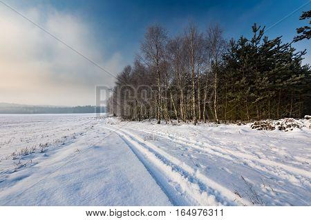 Winter Landscape With Birch Forest