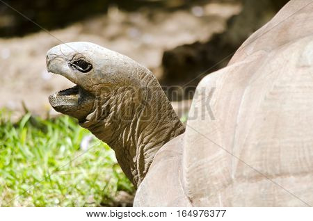 this is a close up of a tortoise with its mouth open