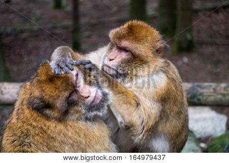 Monkey Forest - Hard Grooming