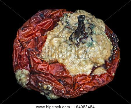 The high degree of moldy tomato, isolated on black background.