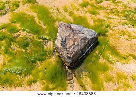 Sandy Ocean Floor Polluted With Algae, Seaweed