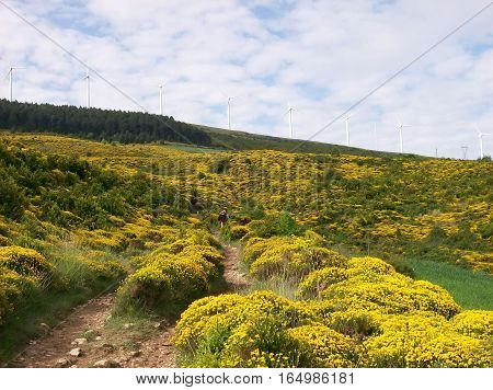 Photography of landscape broom with wind turbine