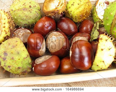 Decoration with chestnuts and chestnut peel in autumn