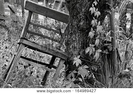 Black and white photos of a Chair that is up against a tree.