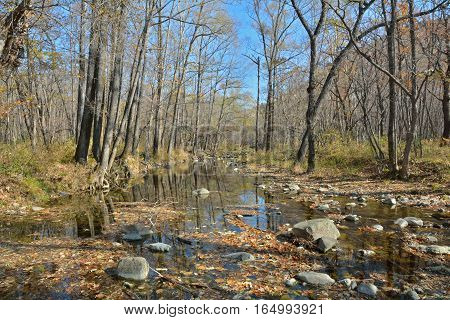 A small woodsy river. Early autumn. Russian Far-East.