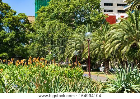 Sydney street with palm trees and bright flowerbed on the foreground. Urban lifestyle landscape. Sydney Australia