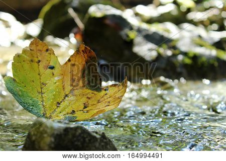 You can see autunm colour one leaf with shine in water.