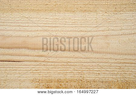 Texture of freshly sawn wood background closeup