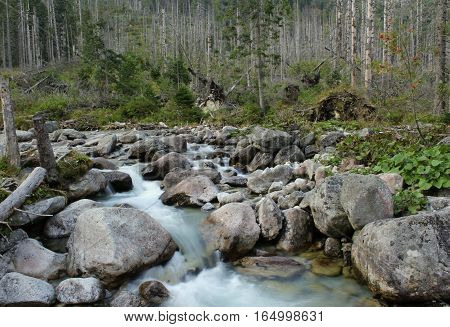 Wild River that flows beneath the mountains in the forest.