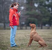 Master and her obedient (rhodesian ridgeback) dog poster
