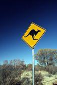 Kangaroo Road Sign poster
