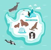 Antarctic continent map with wildlife animals vector illustration. Dolphin, sperm whale, emperor penguin, seal, walrus in cartoon style. Antarctic snowbound continent with wild animals. Cartoon animals collection. Different animals for zoo poster poster
