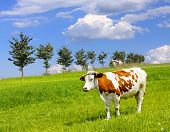 Cow and ecology landscape poster