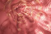 Esophagus mucosa and esophageal sphincter, 3D illustration poster