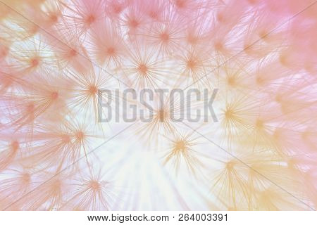 Abstract Background, Dandylion Flower Close Up, Pastel Colors