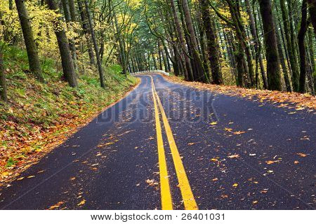 fall winding forest mountain road - autumn in Northwest