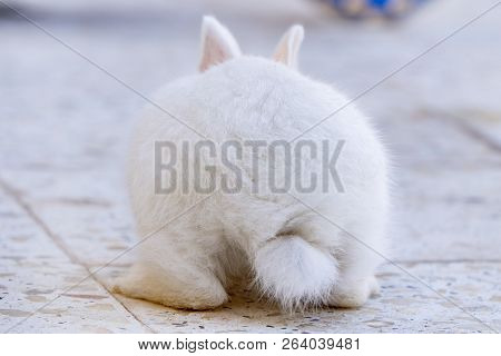 White Bunny Rabbit Looking To Viewer, Little Bunny Sitting Outside, Lovely Pet For Children And Fami