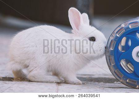 White Bunny Rabbit Push The Cart Wheel, Little Bunny Sitting Outside, Lovely Pet For Children And Fa