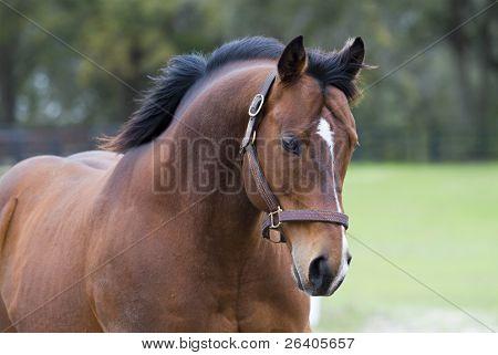 Beautiful Horses 30. See more in my portfolio