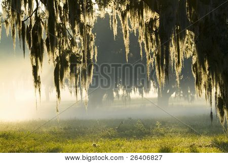 Amazing brilliant sun light in fog 26